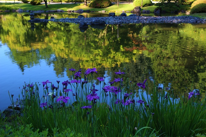Flowers over the pond