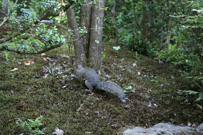 Little Seattle Squirrel